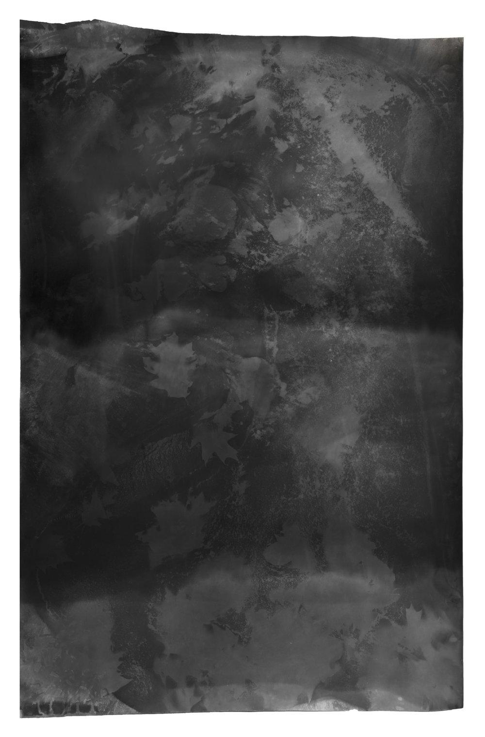 Leaf Test , 2017, 5.41 feet x 3.5 feet, Silver Gelatin Print