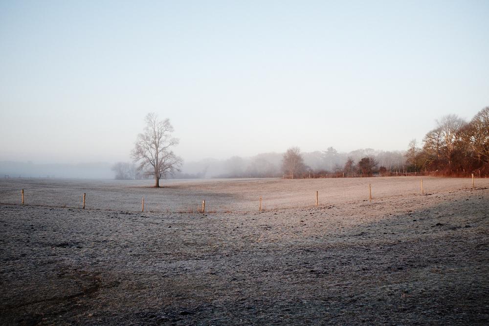 Landscape_006.jpg