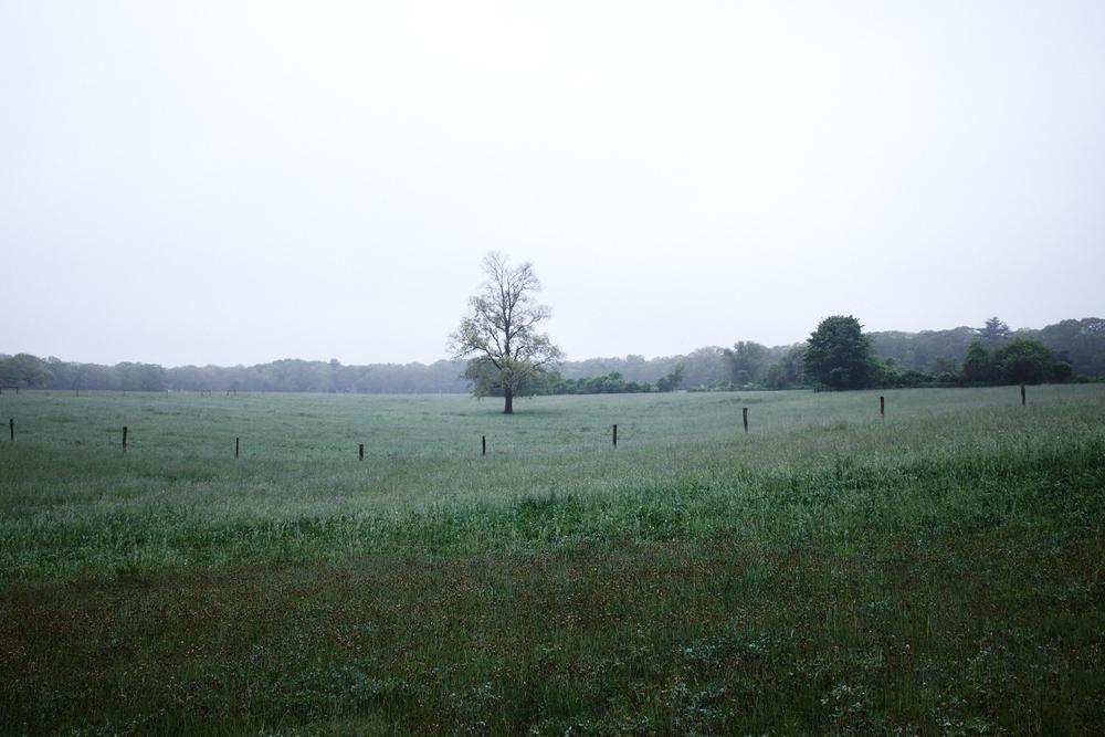 Landscape_008.jpg