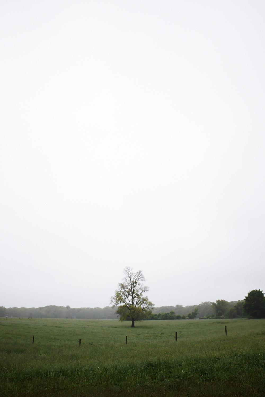 Landscape_010.jpg