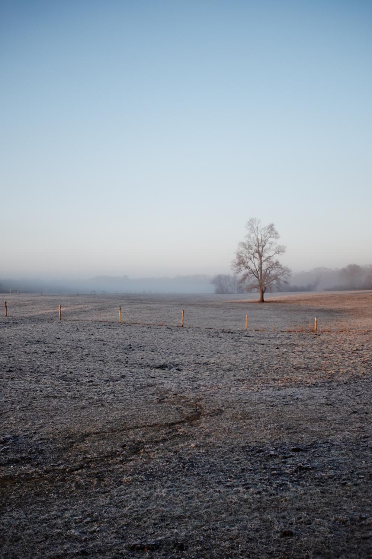 Landscape_015.jpg