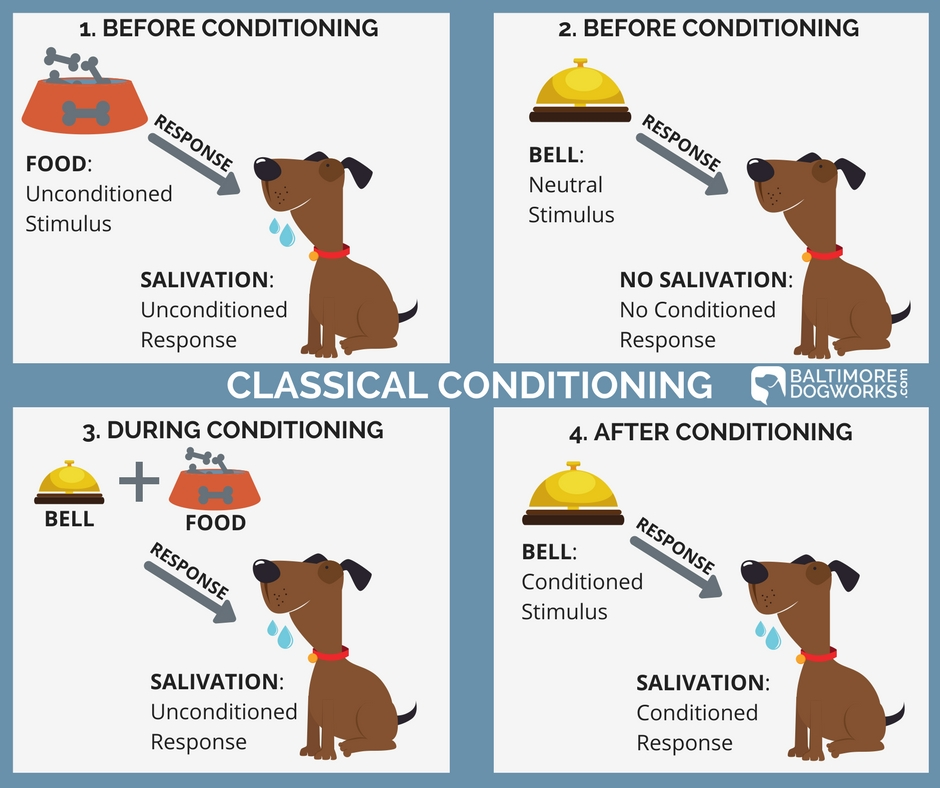 Classical Conditioning (1).jpg