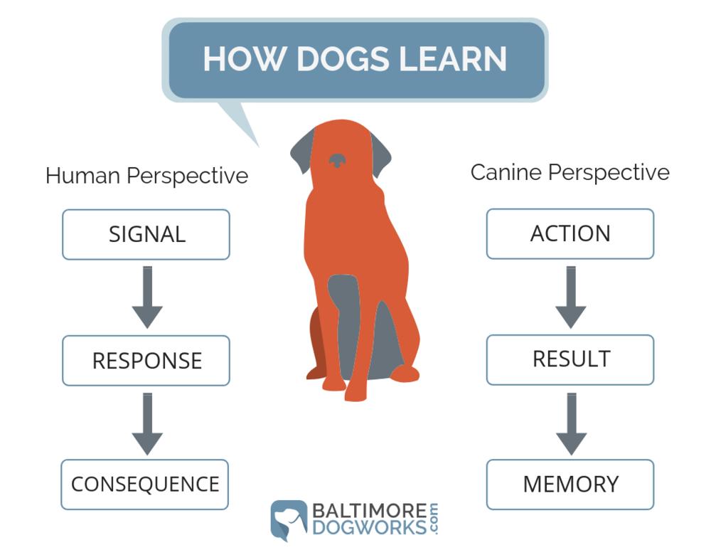 Dog Behavior Primer Infograph.png