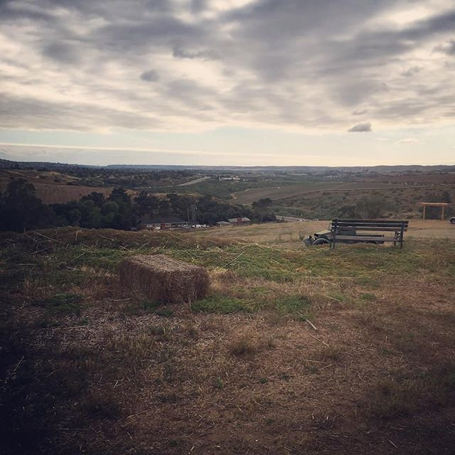 Check out the view from this site for our June wedding!!! It's going to be absolutely beautiful! . . . #blankcanvas #breathtaking #weddingvenue #openland #amazingview #wedding #weddingplanner #eventplanner #event #eventdesign #sandiegowedding #bonsall