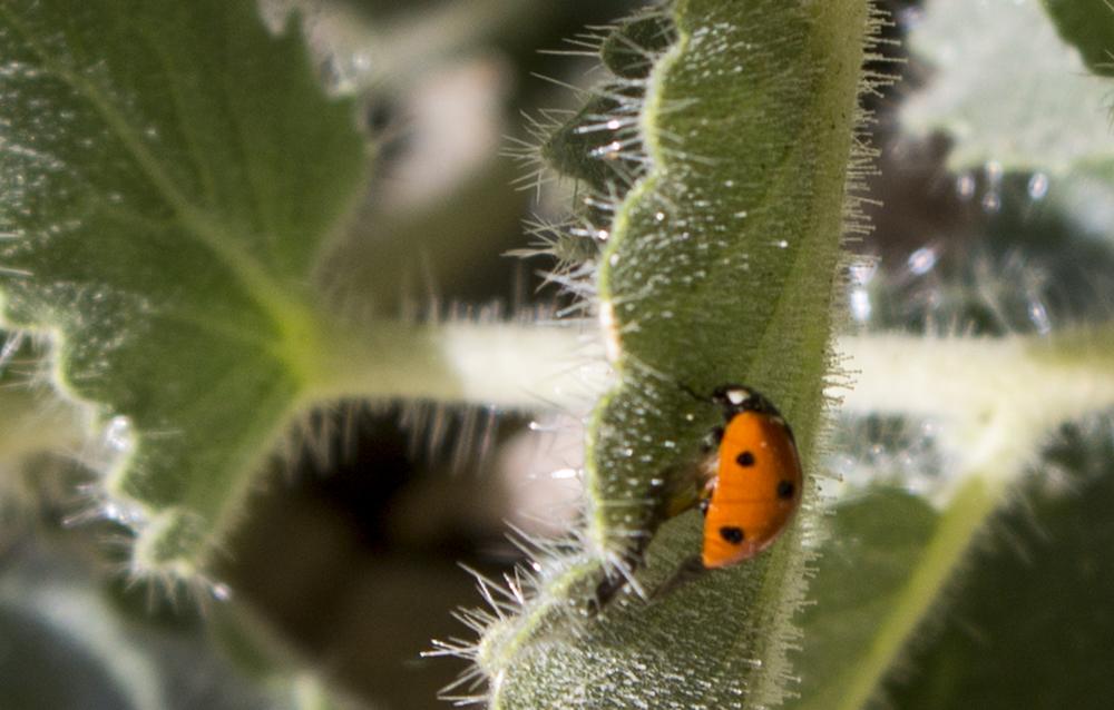 ladybug (1 of 1).jpg