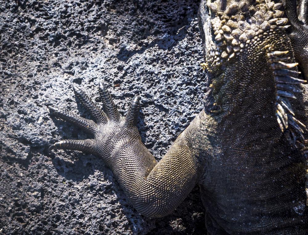 iguanahand (1 of 1).jpg
