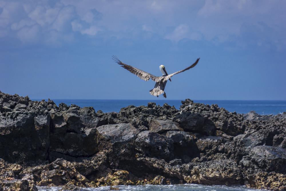 stork (1 of 1).jpg