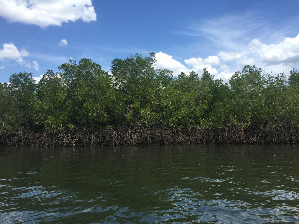 Mangroves in the gulf of fonseca.