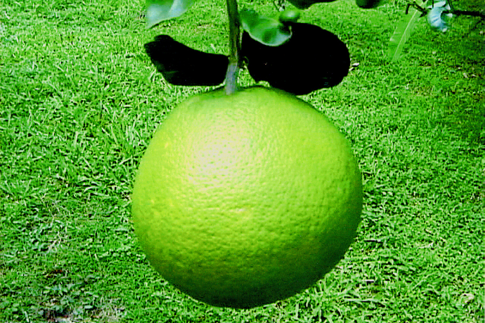 rc.greengrapefruit.jpg