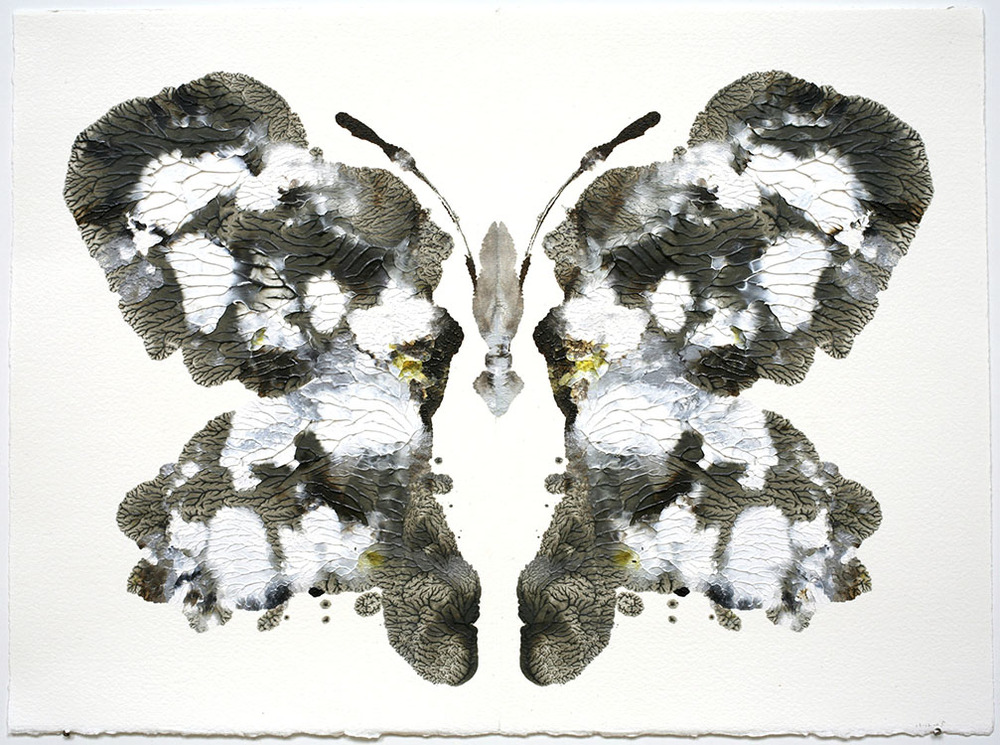 RC.Butterfly550.HG8429.jpg