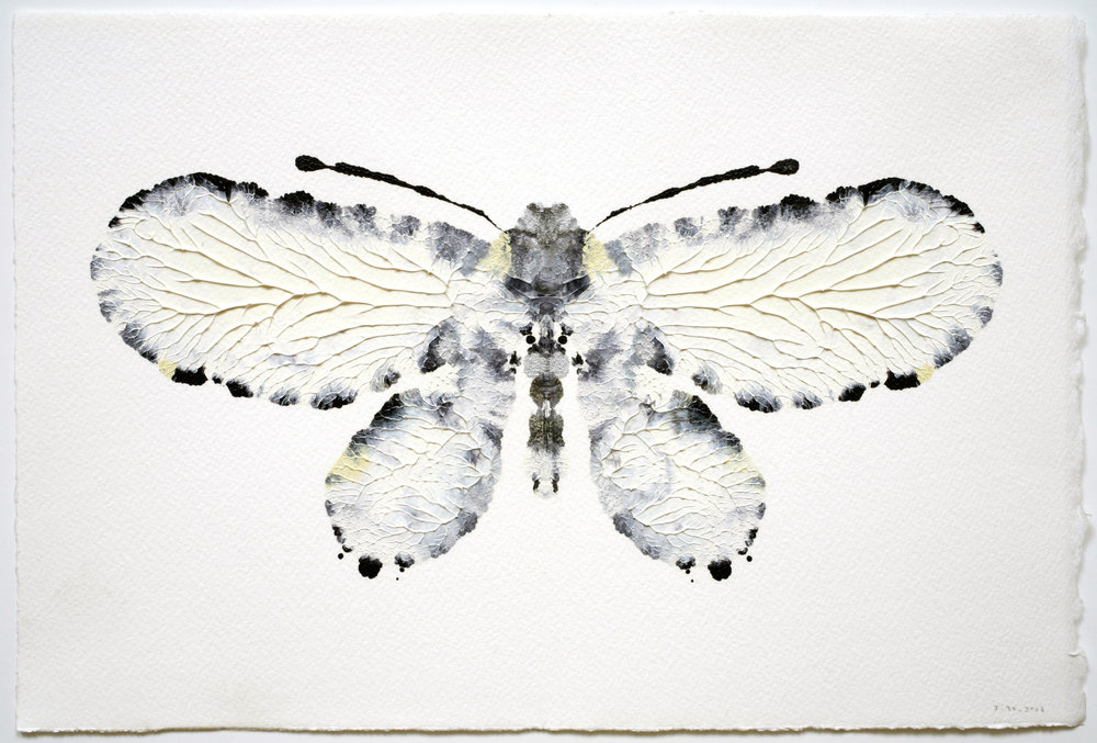 Butterfly #8  from  A Painting Collection , 2006 Oil paint on sized paper | 7.5 x 11 inches | HG9636