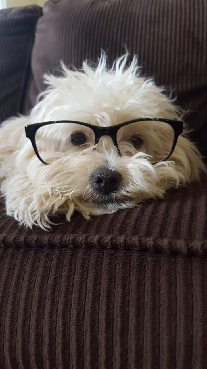 My dog, Bark Wahlberg