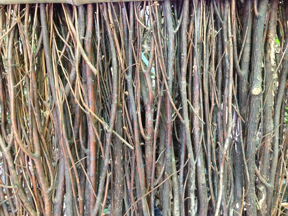 Bamboo Forest, Nara, Japan