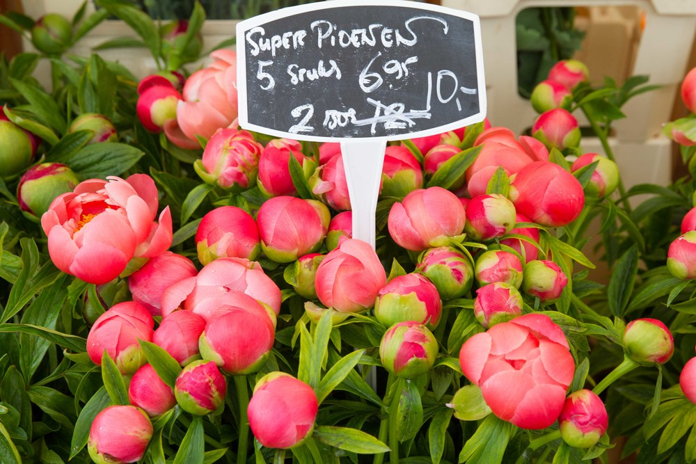 Yay! Peonies are back!