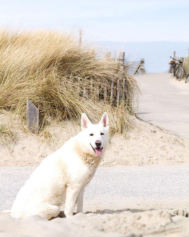 We found a ghost at Kijkduin 🐕🌊. #igersholland #denhaag #kijkduin #thehague #naturephotography #nature #thebeach #mytinyatlas #explore #exploretocreate #dogsofinstagram #glt #dametraveler