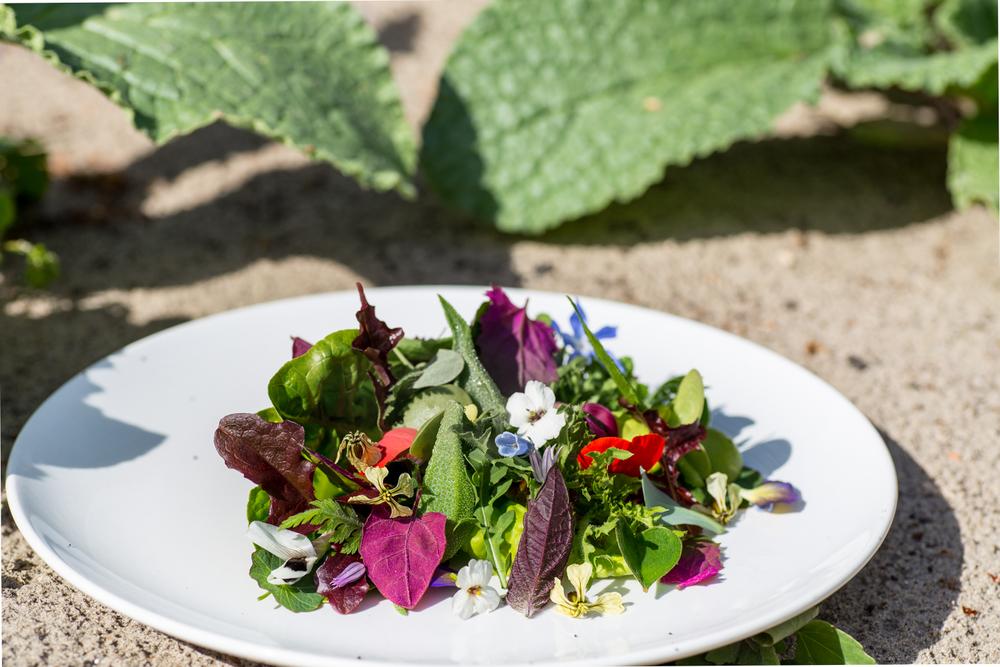 Salade Laantje Voorham | Restaurant Calla's