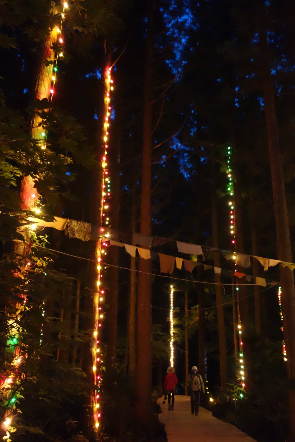 Fairytale forest at Fuji Rock: pretty cool