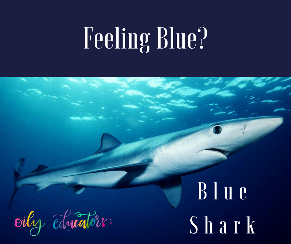 No need to feel like the Blue Shark! Try out these tried and true mood boosting oils.