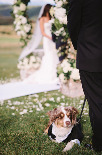Charette Stackman Wedding Dog.png