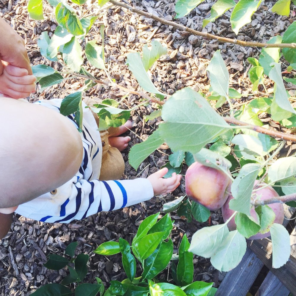 apple picking with finn.jpg
