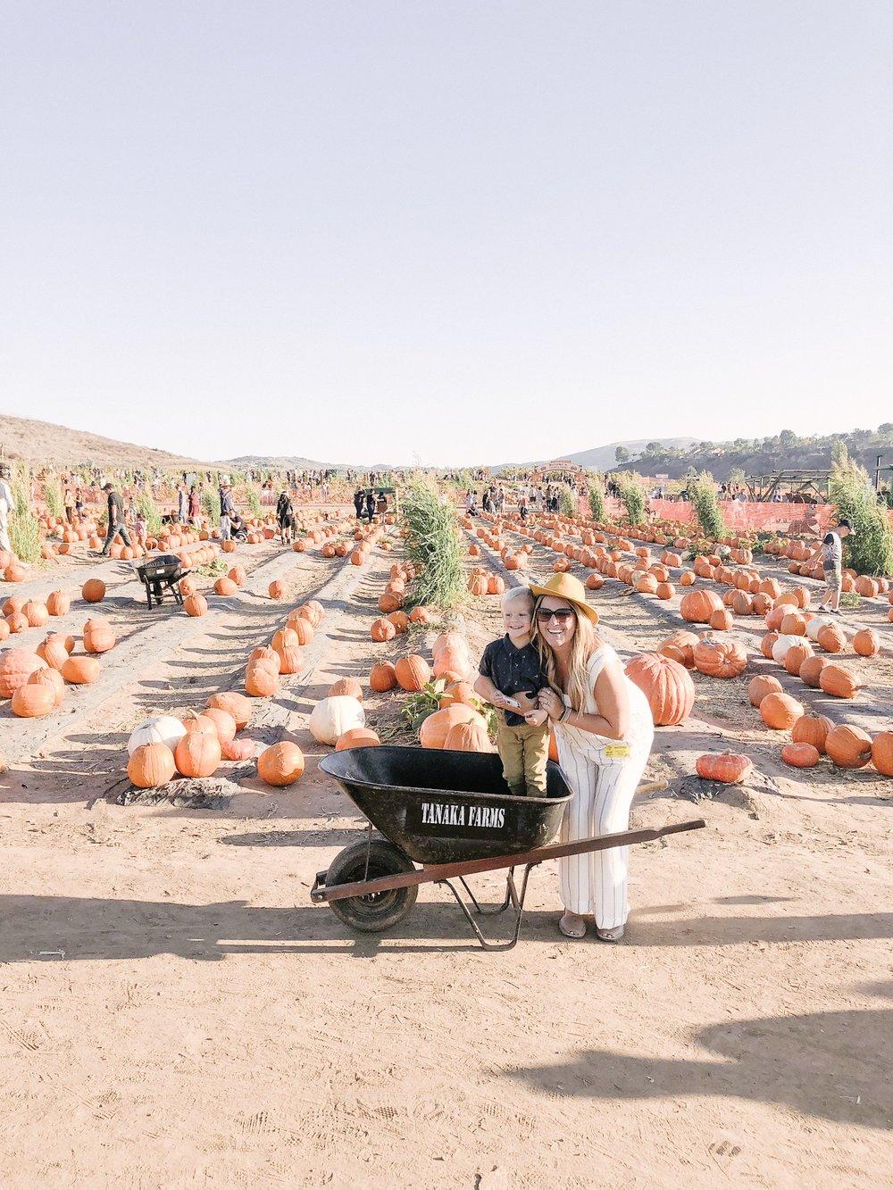 tanaka farms pumpkin patch mom style.JPG