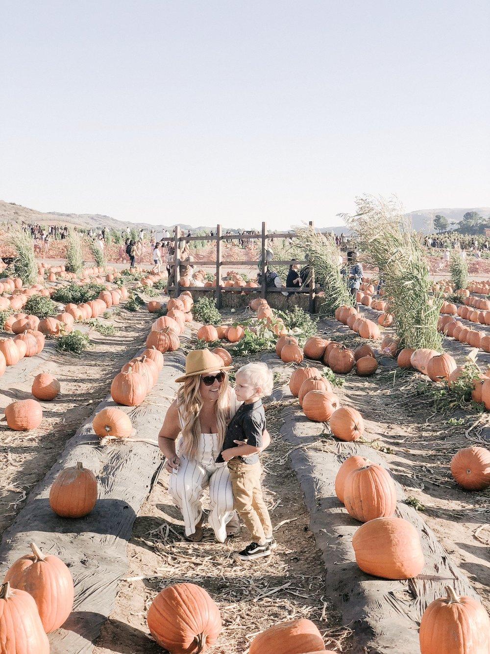 tanaka farms pumpkin patch.JPG