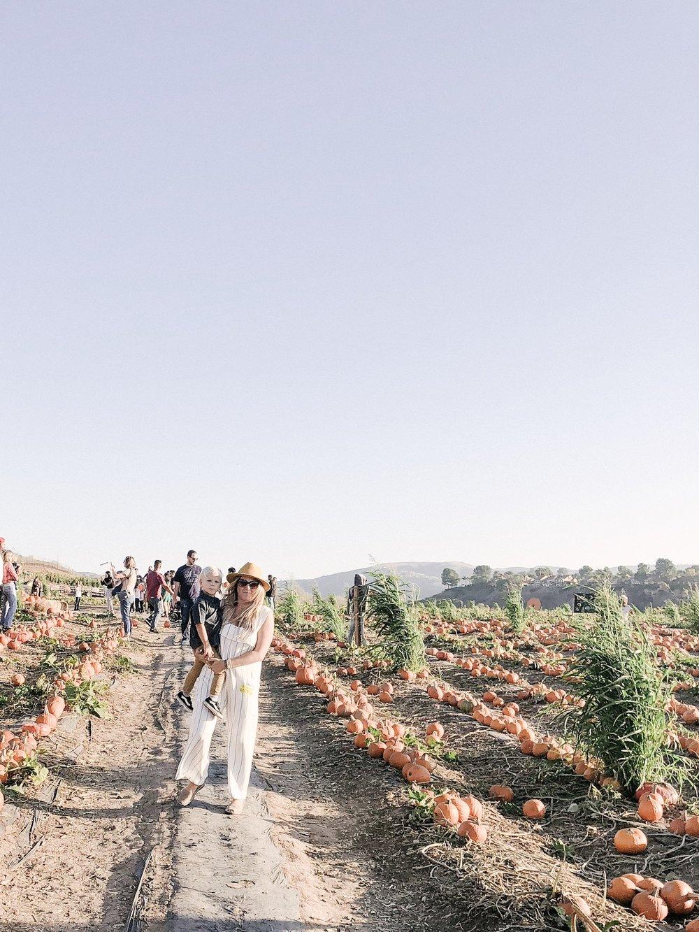 tanaka farms pumpkin patchJPG