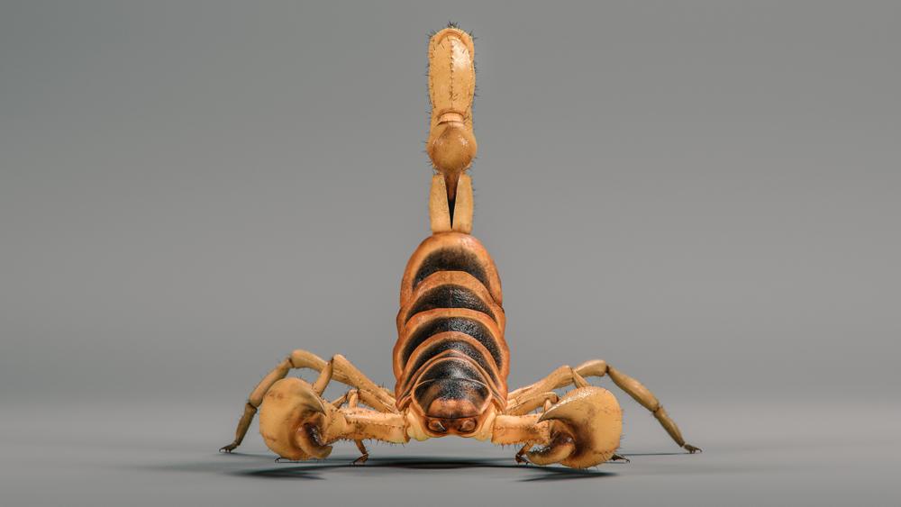 scorpion_002_v2_hd1080.png