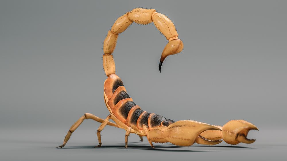 scorpion_004_v2_hd1080.png