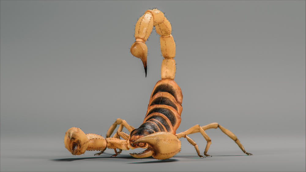scorpion_001_v2_hd1080.png