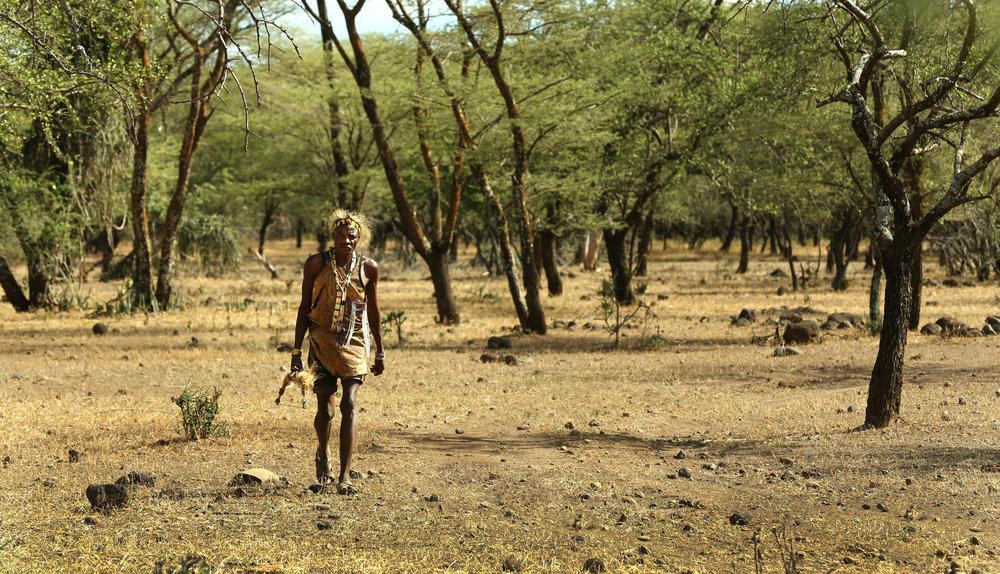 Hadza Chief Walking.jpg