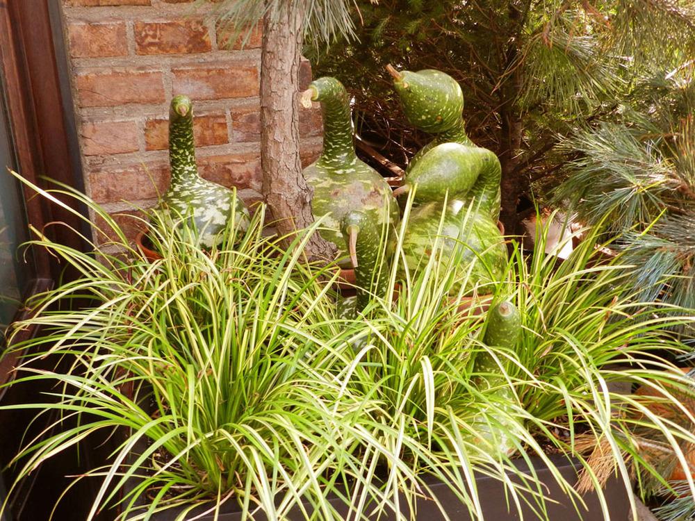 autumn gardens 2011 031.JPG