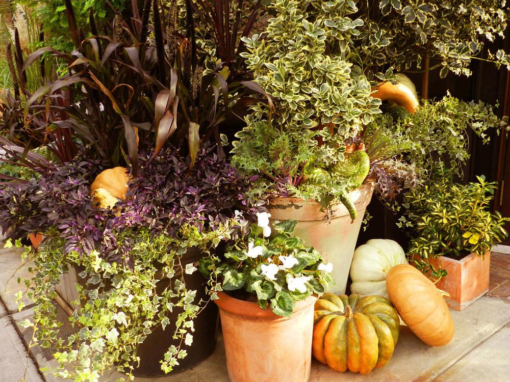 autumn gardens 2011 026.JPG