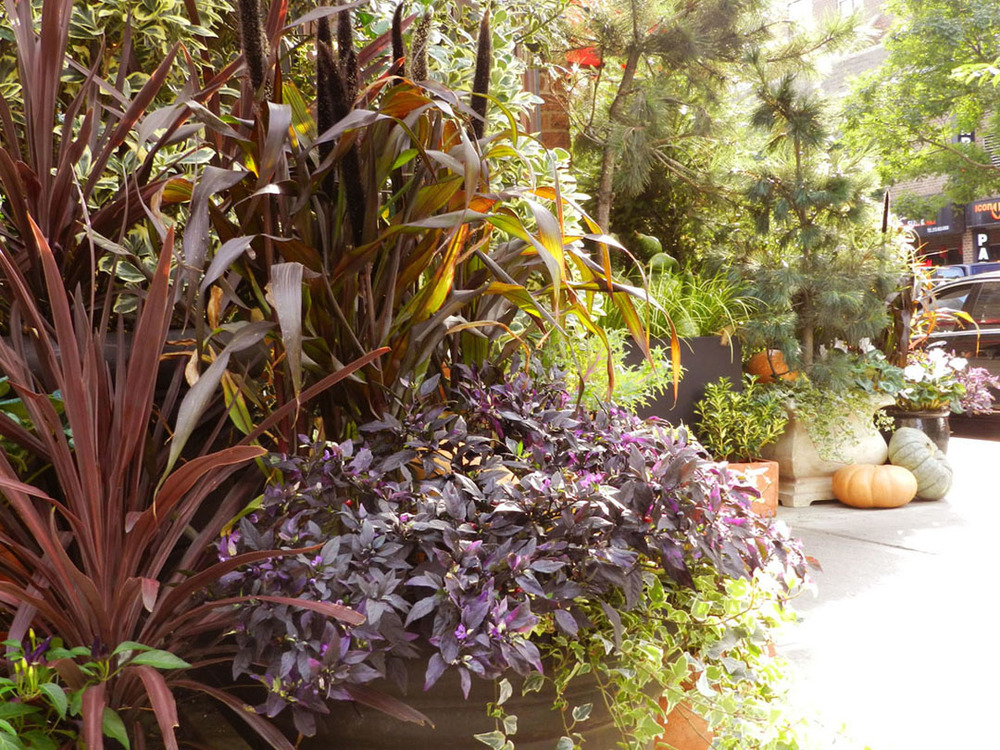 autumn gardens 2011 057.JPG