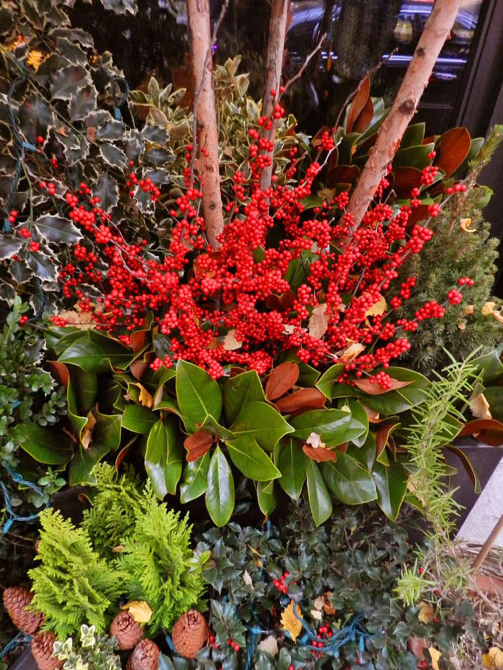gardens 2011 092.JPG