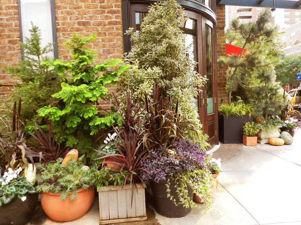 autumn gardens 2011 021.JPG