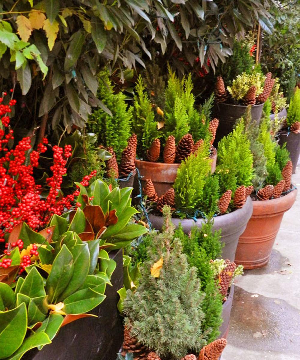 gardens 2011 086.JPG