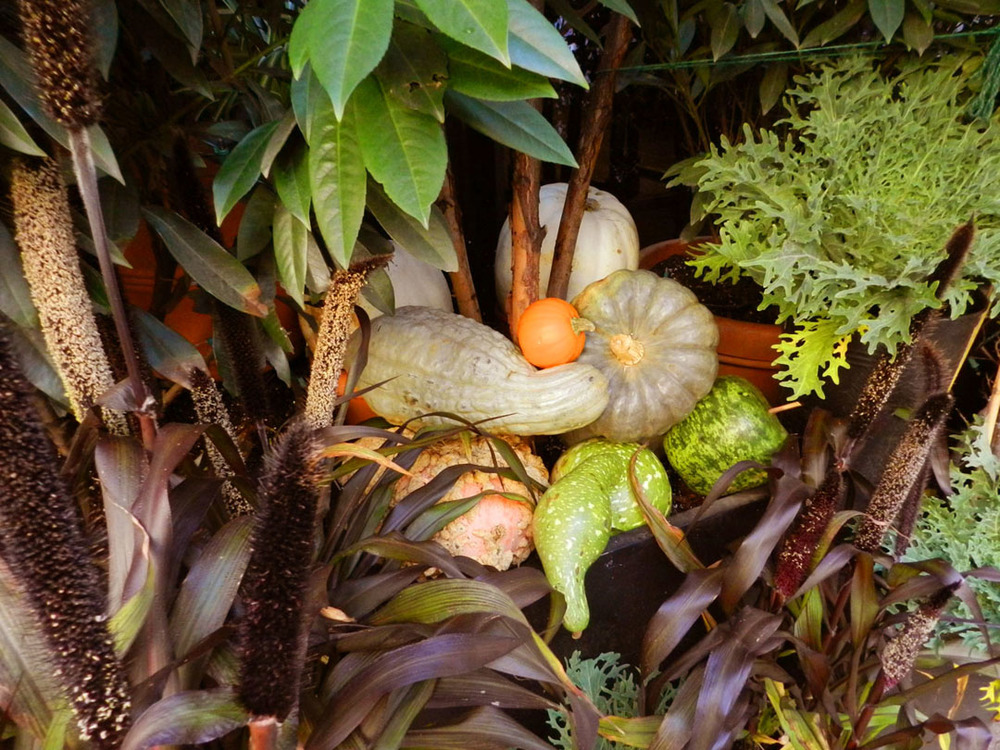breslin dory fall 2011 009.JPG
