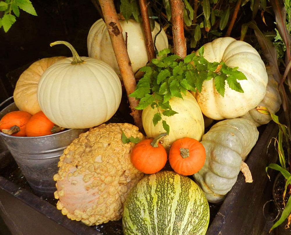 breslin dory fall 2011 006.JPG