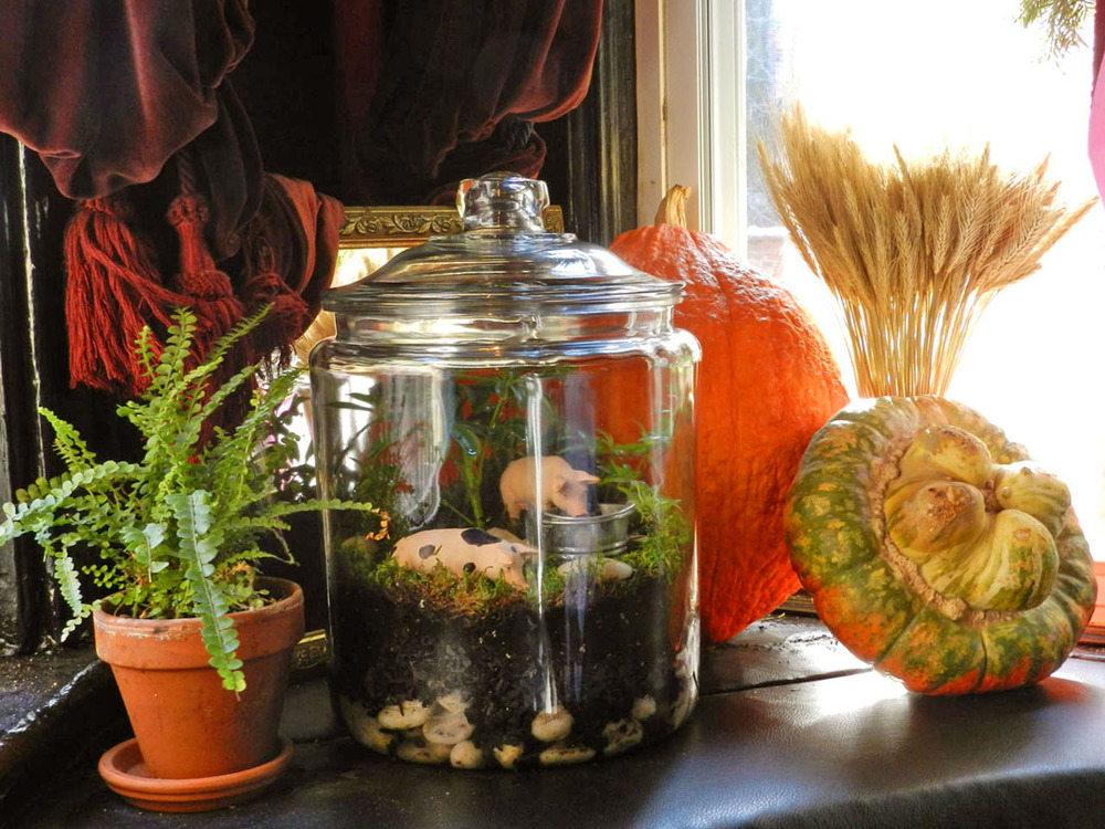 spotted pig winter 2012 terrarium 023.JPG