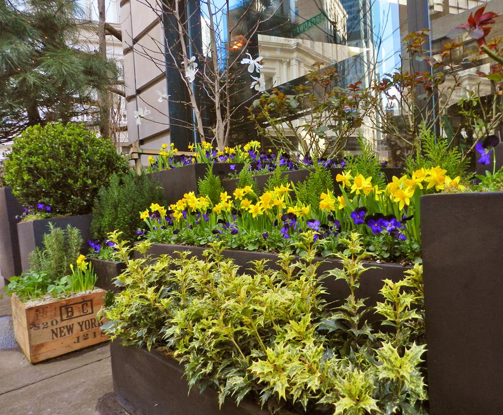 gardens 2012 041.JPG