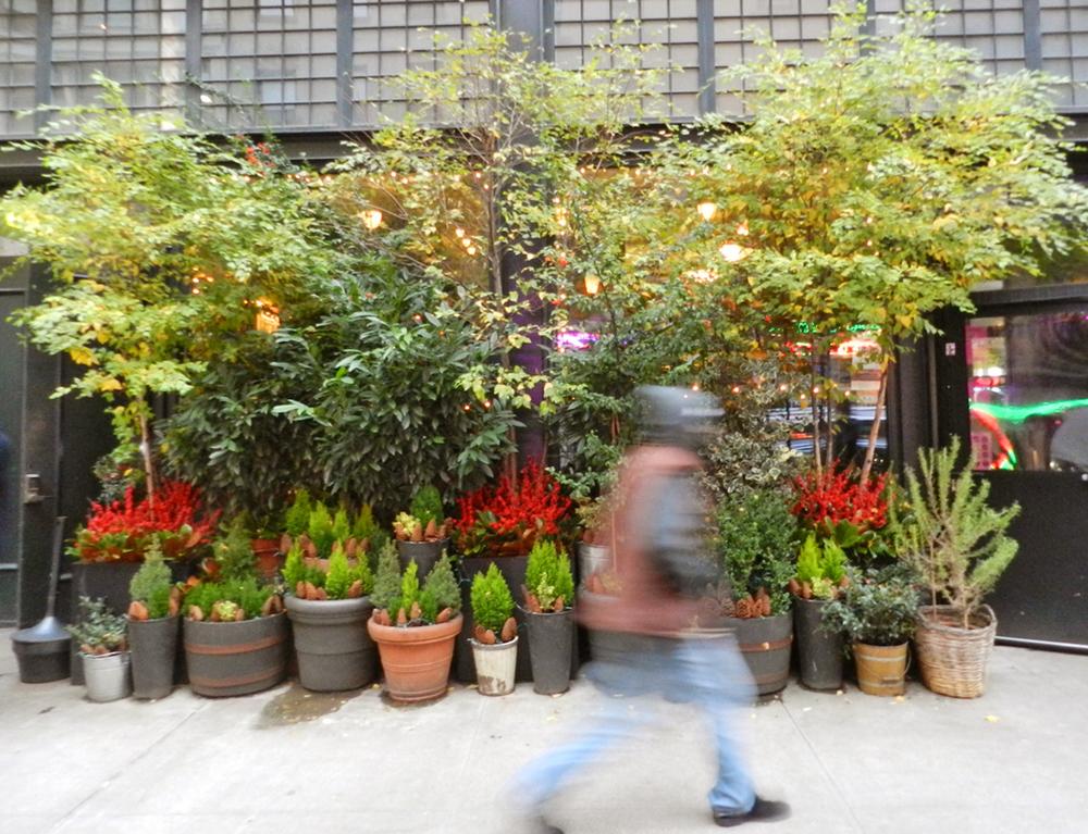 gardens 2011 087.JPG