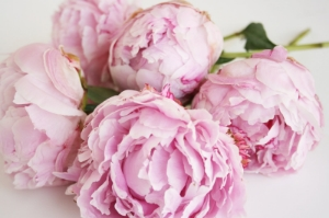I just swoon when I smell a fresh peony ...