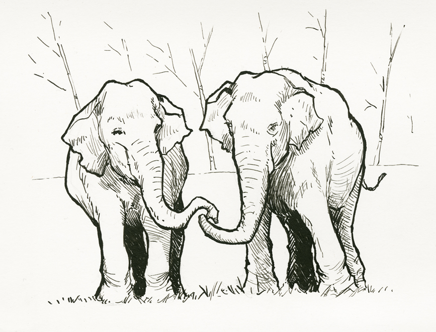 elephants_web.jpg