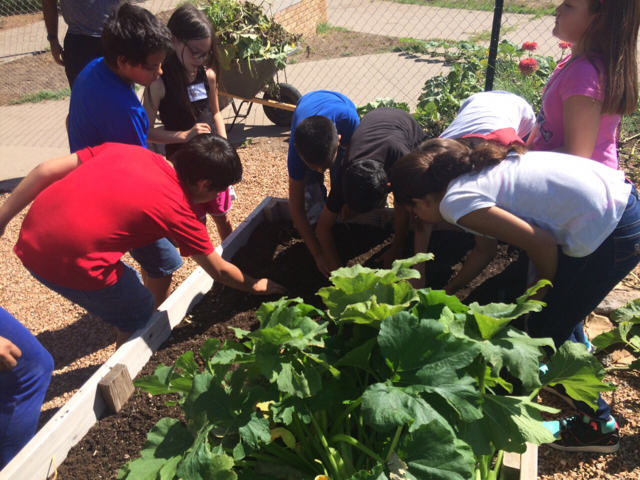 After-School participants tend to vegetables in the Mustard Seed garden.