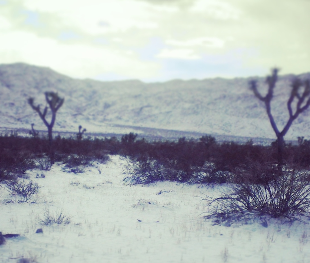 A snowy Joshua Tree National Park