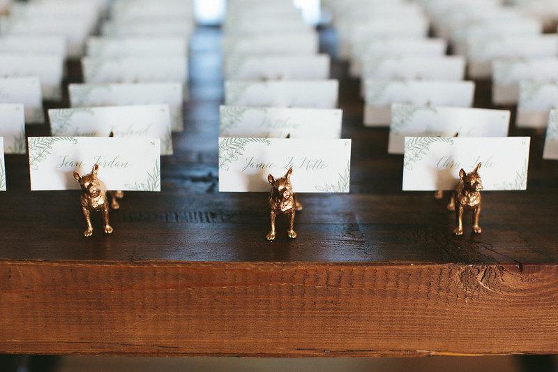 Boston_terriers4.jpg