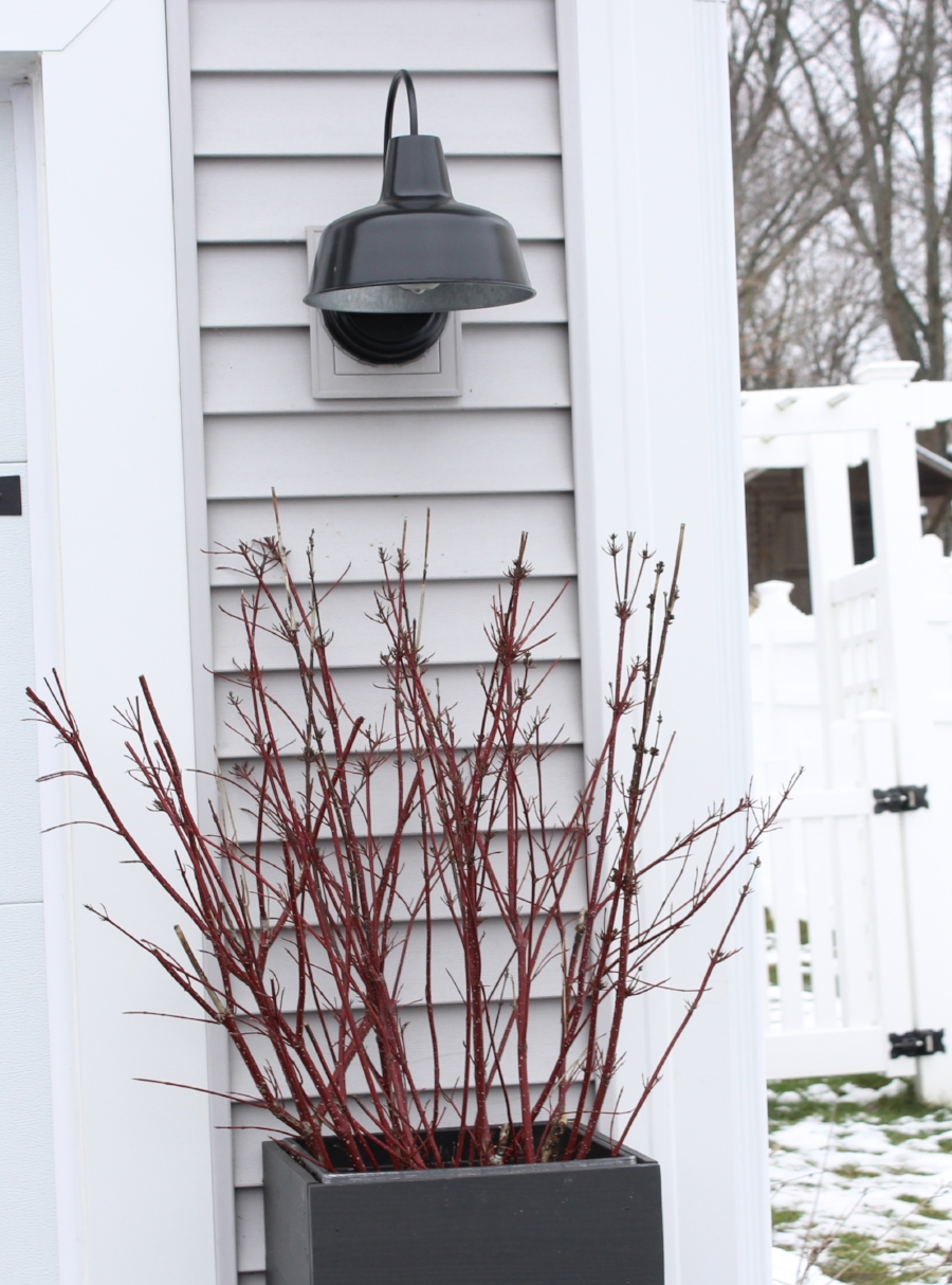 Red Twig Dogwood Branches in Outside Planters
