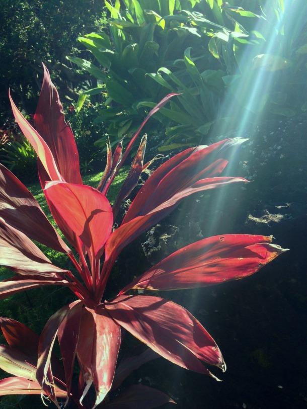 flower sunbeam