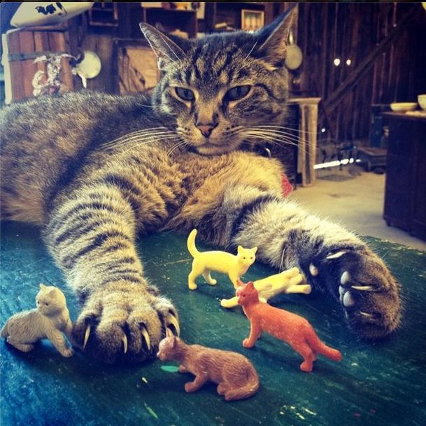 Moose.kitties.jpg